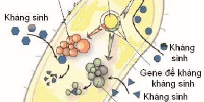Làm gì để hạn chế mặt trái của kháng sinh?