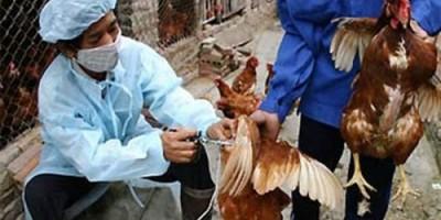 Virus cúm gia cầm A/H7N9 biến đổi độc lực nguy hiểm đến mức nào?